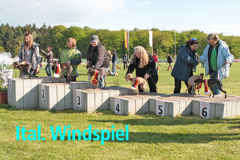 siegehrung-ital-windspiel.jpg